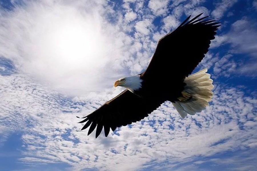 La bellezza di volare alto