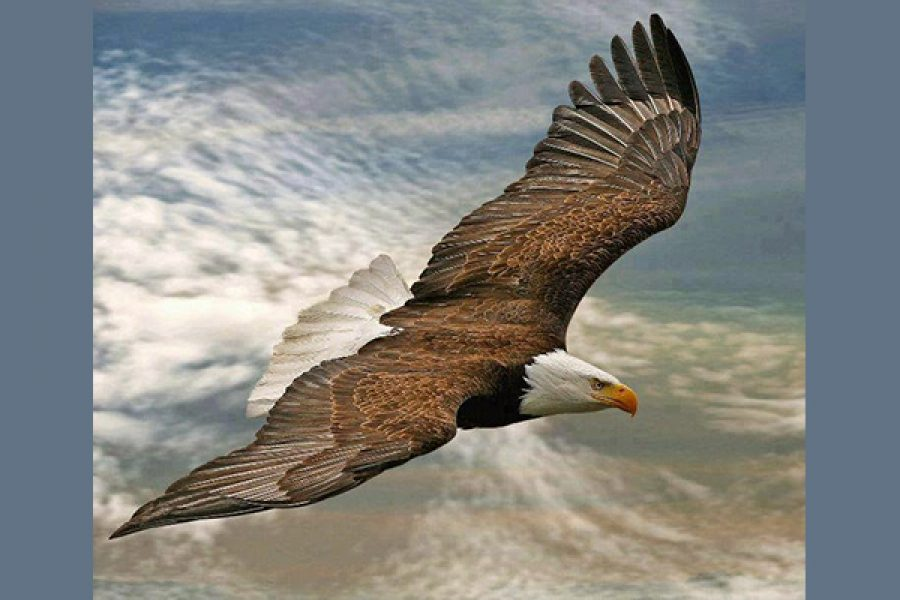 Saper guardare il Cielo per poter volare alto