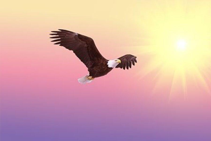 Qual è la qualità del nostro cuore? - Le aquile sono coloro che vedono la terra e spiccano il volo verso il Cielo