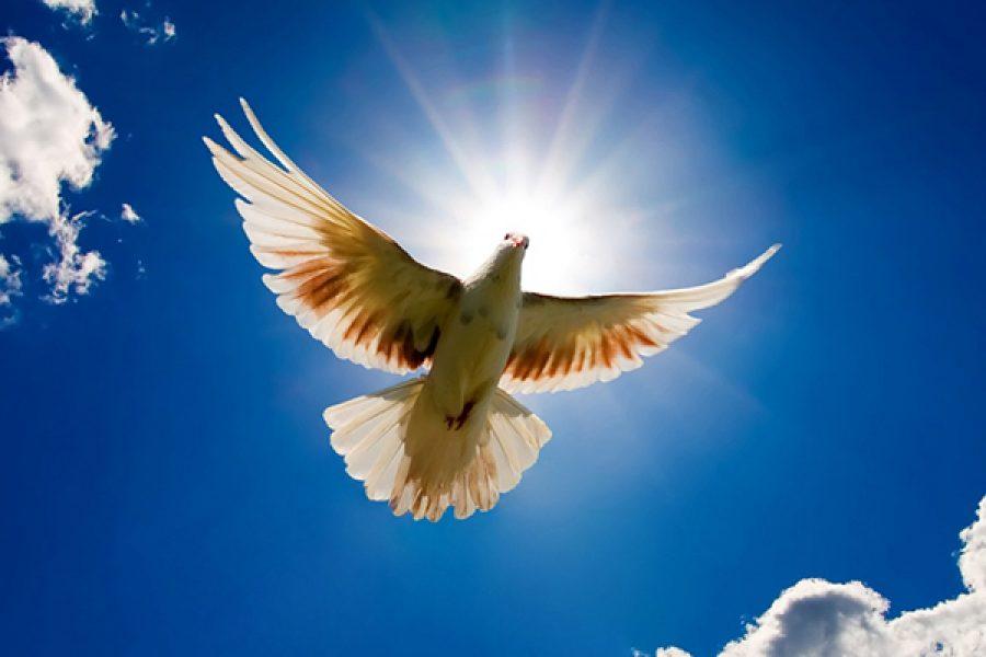 Lo splendore delle ali della colomba - Custodire Gesù nel Tabernacolo