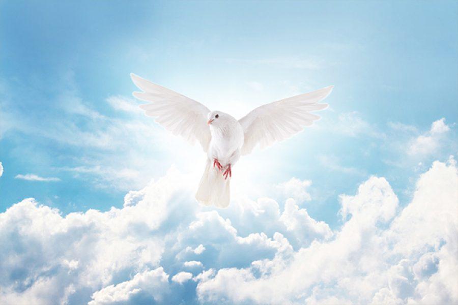 Il peccato contro lo Spirito Santo: i nostri giudizi sono confermati dalla realtà?