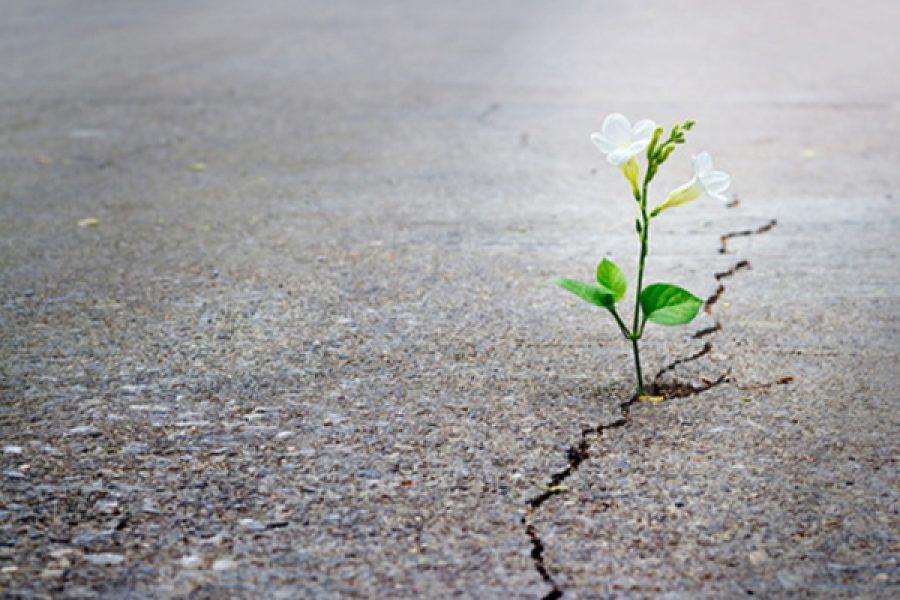 """Meditazione: """"Rendete ragione della Speranza che è in voi"""" (1Pt. 3,15-18)"""