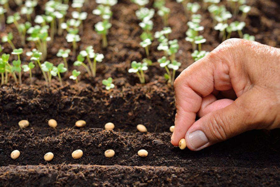 Ciò che tu semini non prende vita, se prima non muore