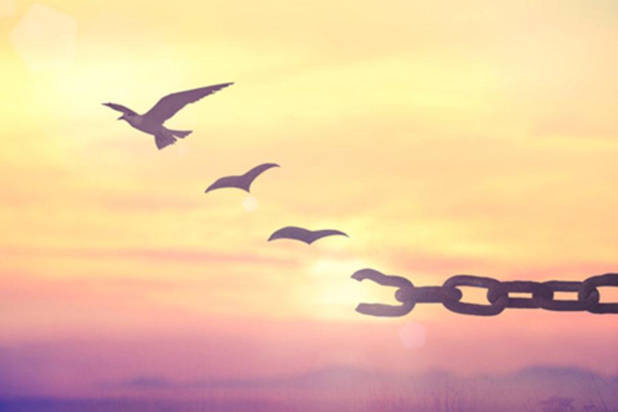 Il perdono e lo sradicamento