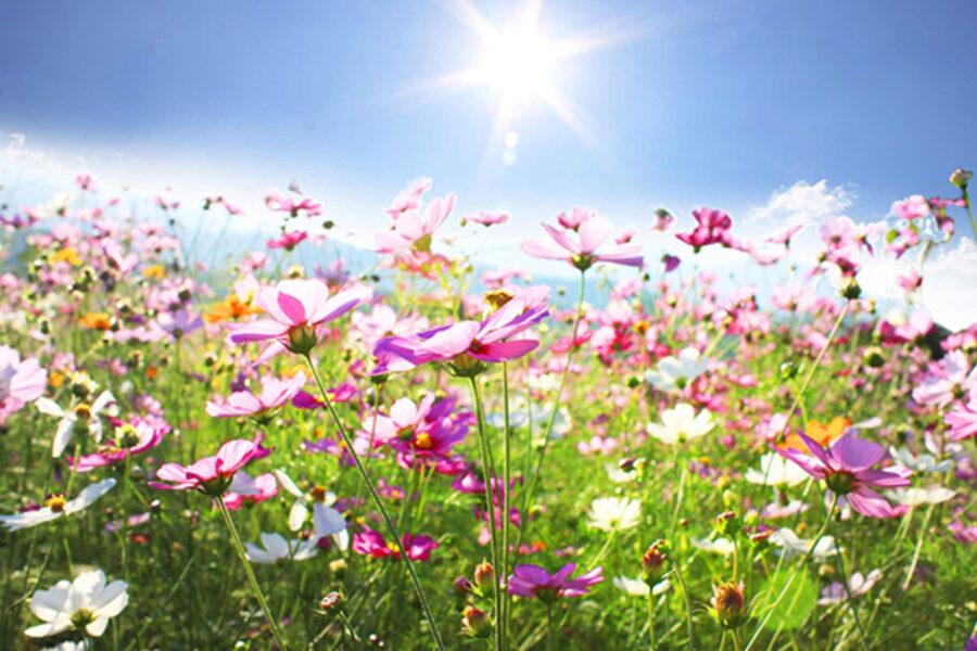 Novena di Natale: il campo fiorito