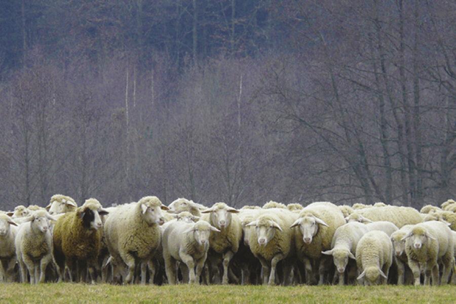 Stanche e sfinite come pecore senza pastore